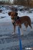 Sonia - idelany pies dla mało aktywbych ludzi - 3