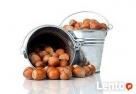 Ukraina.Orzechy wloskie,laskowe 3 zl/kg w skupie sezonowym