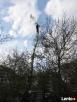 Alpinistyczna Wycinka i Przycinka Drzew Rzeszów - 4