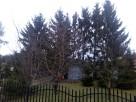 Wycinka drzew Lublin,Lubartów,Łęczna - 1