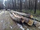Wycinka drzew Parczew i okolice - 1