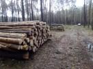 Wycinka drzew Parczew i okolice - 2
