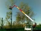 Wycinka drzew, frezowanie pni - 1