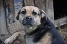 Mały - pies z łańcucha, kochany, łagodny, towarzyszki ADOPCJ - 4