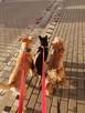 PSIdomowa opieka nad psami!