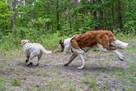 Sesje dla zwierząt. Fotograf Łódź - 2