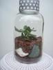 Żywa kompozycja roślinna w szkle 3 - 6