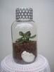Żywa kompozycja roślinna w szkle 3 - 5
