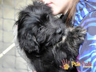 POLUSIA-super fajna, kochana,kudłata sunia-4-5 miesięcy, ADOP - 8