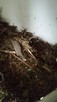 ODDAM - Drobne gałęzie i igliwie ok. 2m3