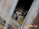 RAPIŚ-kochany, wspaniały, wesoły niewidomy piesek szuka domu - 8