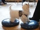SKUTECZNE szkolenie Twojego psa, cała Wawa! - 13