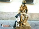 SKUTECZNE szkolenie Twojego psa, cała Wawa!