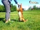 SKUTECZNE szkolenie Twojego psa, cała Wawa! - 6
