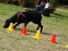 SKUTECZNE szkolenie Twojego psa, cała Wawa! - 15