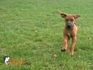 SKUTECZNE szkolenie Twojego psa, cała Wawa! - 12