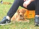 SKUTECZNE szkolenie Twojego psa, cała Wawa! - 4