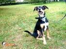 SKUTECZNE szkolenie Twojego psa, cała Wawa! - 5