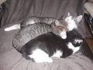Malutkie kotki czekają na adopcję Wioletta P