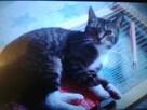 BŁAGAM O POMOC!!! Zaginęła kotka - 1