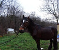 Sprzedam 2 konie