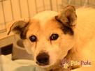 BRAFIK-kochany, spokojniutki starszy psiak-szukamy troskliwe - 2