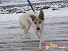 BRAFIK-kochany, spokojniutki starszy psiak-szukamy troskliwe - 15