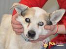BRAFIK-kochany, spokojniutki starszy psiak-szukamy troskliwe - 13
