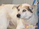 BRAFIK-kochany, spokojniutki starszy psiak-szukamy troskliwe - 6