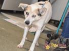 BRAFIK-kochany, spokojniutki starszy psiak-szukamy troskliwe - 14