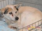 BRAFIK-kochany, spokojniutki starszy psiak-szukamy troskliwe - 4