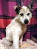 BRAFIK-kochany, spokojniutki starszy psiak-szukamy troskliwe - 1