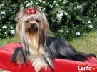 Strzyżenie psów, profesjonalna kosmetyka zwierząt PARADA