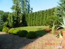 Firma ogrodnicza ogrody Gardens usługi ogrodnicze aranżacja - 4