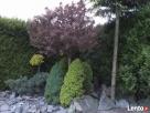 GARDENUS Usługi ogrodnicze - 2