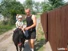 KUCYK - atrakcja z dojazdem do klienta Poleć Obserwuj - 4