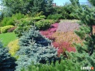 GARDENUS Usługi ogrodnicze - 4