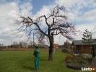GARDENUS Usługi ogrodnicze - 1