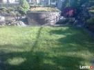 OGRODNIK ,ogrodnictwo,usługi ogrodnicze ,pielęgnacja zieleni - 7