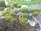 OGRODNIK ,ogrodnictwo,usługi ogrodnicze ,pielęgnacja zieleni - 3