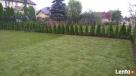 Trawa z rolki w Twoim ogrodzie ? wycena gratis - sprawdź sam