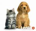 Bezstresowe strzyzenie psow,kotow dlugowlosych - 4