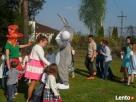 Zając Wielkanocny na wynajem - atrakcje na wielkanoc - 3