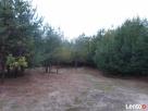 Działka dla kochających spokój i bliskość przyrody, uzbrojon Żarki