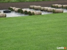 Trawniki, trawa z rolki w rolkach z folii Szczecin, Goleniów Szczecin