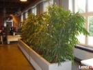 BioArt pielęgnacja roślin w ogrodzie i w firmie Lubelskie - 4