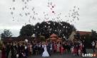 Obsługa imprez wesela fotobudka balony z helem animacje - 5