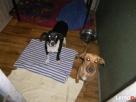 Kaja i Beti, dwie urocze sunie - 5