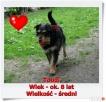 Toudi - terierkowaty kudłacz :)