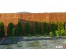 Panele wiklinowe Ogrodzenie wiklinowe Płoty wiklinowe Andrychów